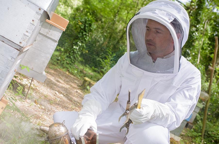 Bees Smoker and Man
