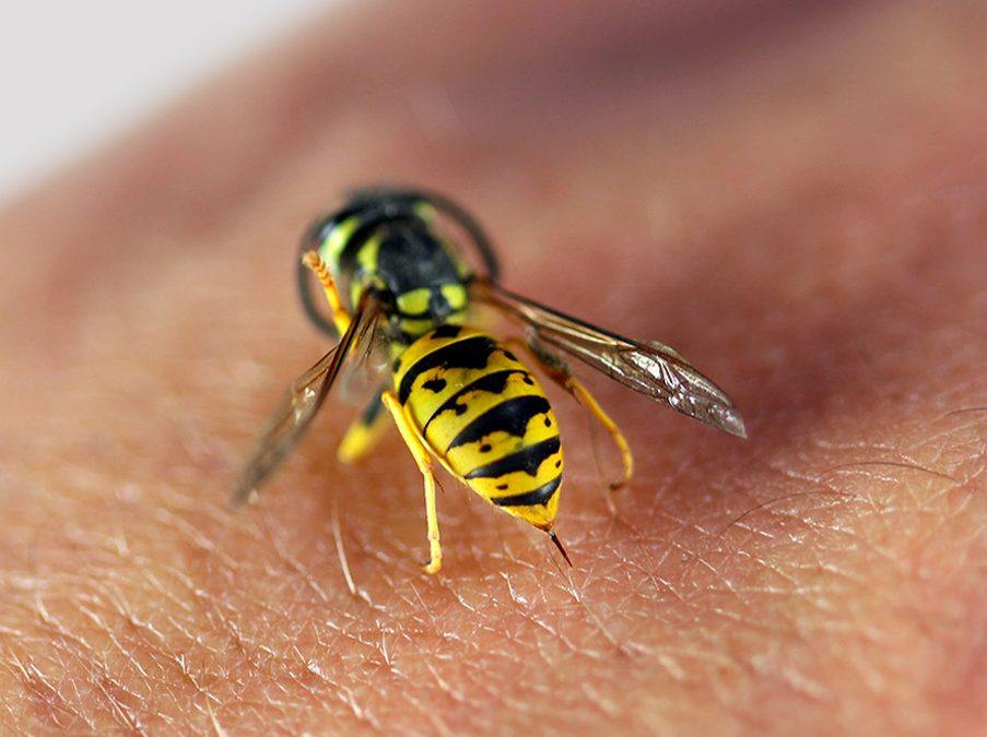 Bee infestations destroy your property, threaten your family, and attract other pests